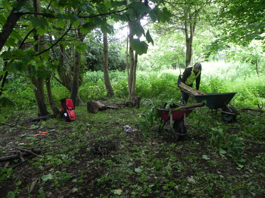 a) clearing the woodland site